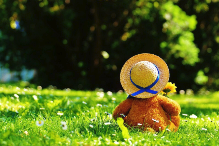 Teddy bear with a hat and sunflower faced away from the camera, in a park.